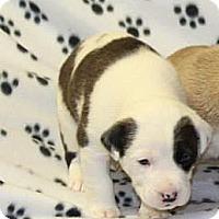 Adopt A Pet :: Zack - Burr Ridge, IL