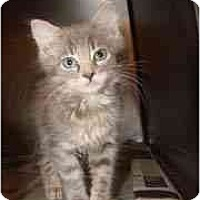 Adopt A Pet :: Eli, Ellie, Elias - Arlington, VA