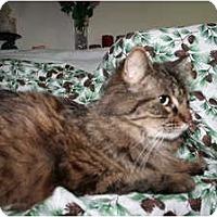 Adopt A Pet :: Percival - Santa Rosa, CA