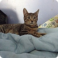 Adopt A Pet :: Lucy - Pittstown, NJ