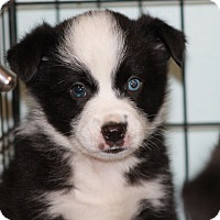 Adopt A Pet :: PANDA - CHESTERFIELD, MI
