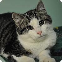 Adopt A Pet :: Nixon - Rockaway, NJ