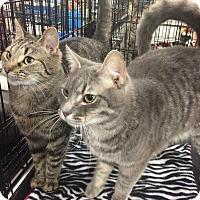Adopt A Pet :: Albert Jr & Sister Sassy - Harrisburg, NC