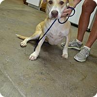 Adopt A Pet :: Sunny - Osceola, AR