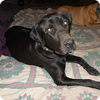 Adopt A Pet :: Foster - North Jackson, OH