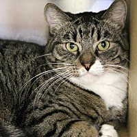 Adopt A Pet :: Gandolph - Mission Viejo, CA