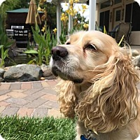 Adopt A Pet :: Wally - Sherman Oaks, CA