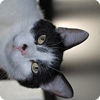 Adopt A Pet :: Tom (TD) - Exton, PA