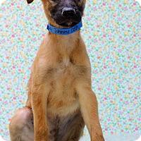 Adopt A Pet :: Johnny Cash - Waldorf, MD