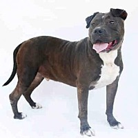 Adopt A Pet :: KINITO - Los Angeles, CA