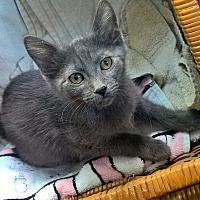Adopt A Pet :: Phoenix - Highland, IN