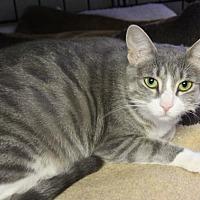 Adopt A Pet :: Lily Grace - Winston-Salem, NC