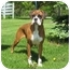 Photo 3 - Boxer Dog for adoption in Arlington Heights, Illinois - Sweetheart
