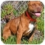 Photo 1 - American Pit Bull Terrier Dog for adoption in Rolling Hills Estates, California - Trixie