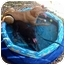 Photo 3 - Labrador Retriever Mix Dog for adoption in Cumming, Georgia - Molly
