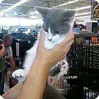 Adopt A Pet :: Lil  Wayne - Sterling Hgts, MI