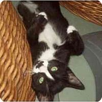 Adopt A Pet :: moostasalina - Little Neck, NY