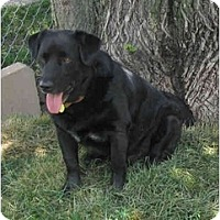 Adopt A Pet :: midnight - Wahoo, NE