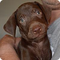 Adopt A Pet :: Sweetie-adoption in progress - Marshfield, MA
