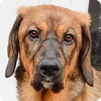 Adopt A Pet :: Reena - Minneapolis, MN