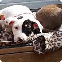 Adopt A Pet :: Jill - Toledo, OH