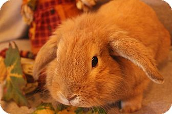Lop-Eared Mix for adoption in Hillside, New Jersey - Buddy