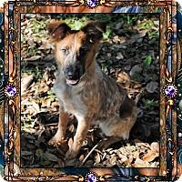 Adopt A Pet :: Ruby - Crowley, LA