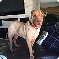 Adopt A Pet :: DABNEY girl! - Orlando, FL
