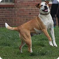 Adopt A Pet :: Sage - Doylestown, PA