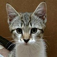 Adopt A Pet :: Cash - Winston-Salem, NC