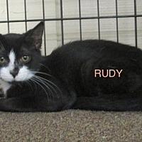 Adopt A Pet :: RUDY - detroit, MI