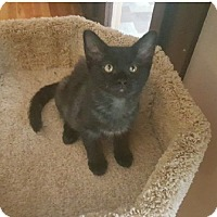 Adopt A Pet :: Smokey - Burbank, CA
