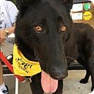 Adopt A Pet :: Snoopy 5454