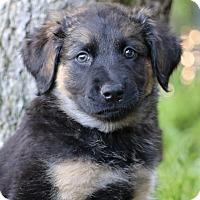 Adopt A Pet :: Zion von Madison - Thousand Oaks, CA