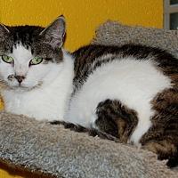 Adopt A Pet :: Belle - Salem, WV