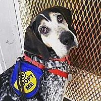 Adopt A Pet :: Roy - Washington, DC