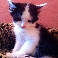 Adopt A Pet :: Jersey - Tampa, FL