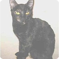 Adopt A Pet :: Roxie - Mesa, AZ