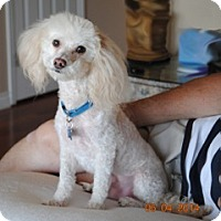 Adopt A Pet :: Buddy - ORANGE COUNTY, CA