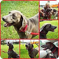 Adopt A Pet :: SARGE - Inverness, FL