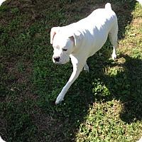 Adopt A Pet :: Titus - Brentwood, TN