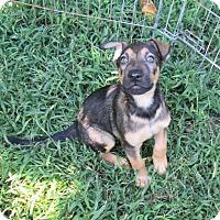 Adopt A Pet :: Jason - West Warwick, RI