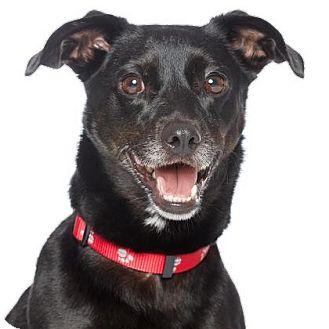 Dachshund Mix Dog for adoption in Los Angeles, California - BURTON