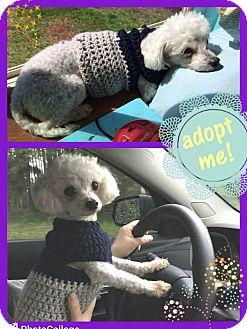Adopt A Pet :: Ana  - Renton, WA