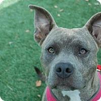 Adopt A Pet :: Elektra - Bradenton, FL