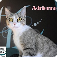 Adopt A Pet :: Adrienne - Big Beautiful Eyes! - Huntsville, ON