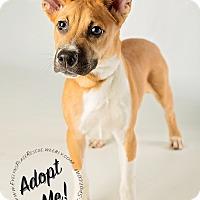 Adopt A Pet :: Logan - Gainesville, GA