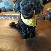 Adopt A Pet :: Leopold Franklin - Pataskala, OH