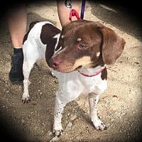 Adopt A Pet :: Jaxon - Quinlan, TX