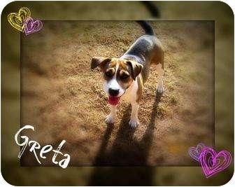 Beagle Mix Dog for adoption in Spanish Fort, Alabama - Greta